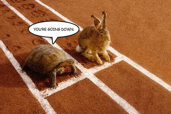 The Tortoise vs The Hare